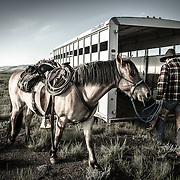 Boss Wrangler Johnny Loading Up, CM Ranch, Wyoming