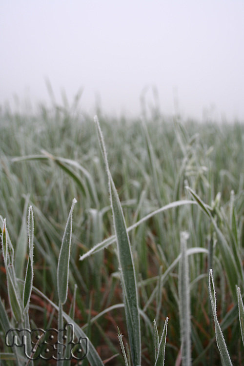 View of rozen grass on meadow