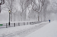 The Mall and American Elms in Central Park after a snow storm.
