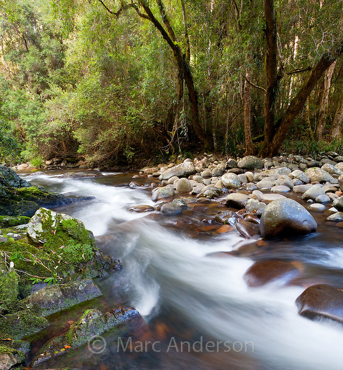 Flowing river in temperate rainforest, Barrington Tops National Park, NSW, Australia