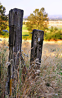 These very old fence posts overlook the fields and farmland of Western Oregon