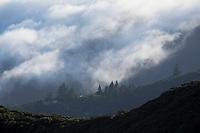 Coastal Fog Rolling Down Ridges of Mount Tamalpais State Park at Sunset, Marin County, California