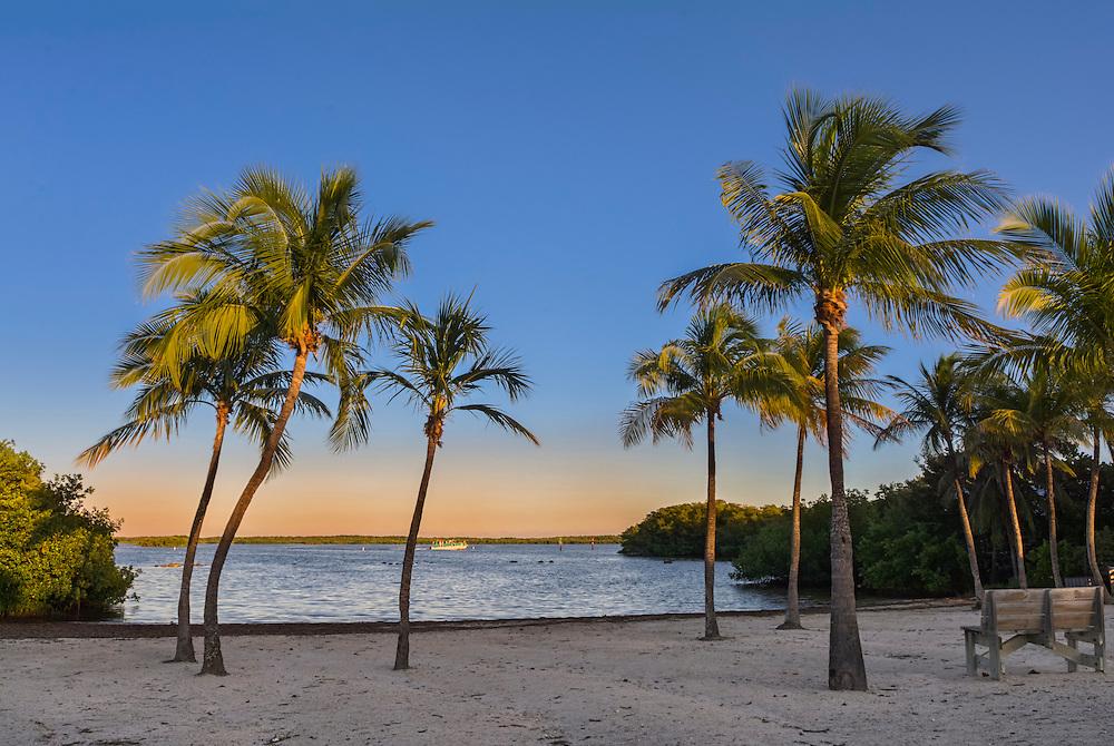 Far Beech, John Pennekamp Coral Reef State Park, Key Largo, Florida Key, FL