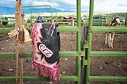 Rodeo Chaps, Montana