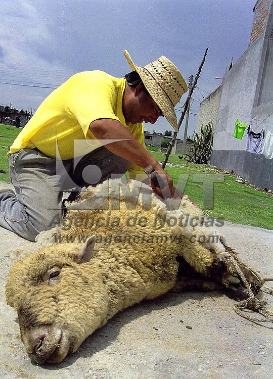 """Toluca, Méx.- Trasquilando un borrego para sacar """"lana"""". Agencia MVT / Mario B. Arciniega"""