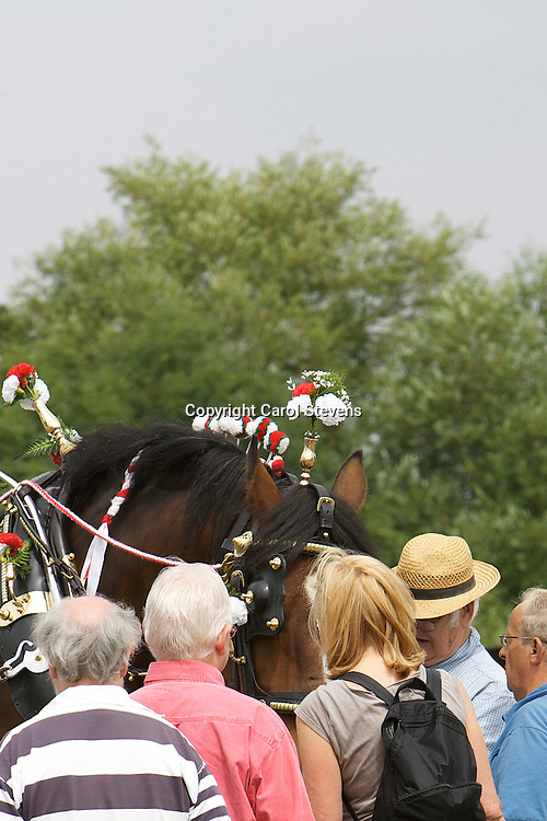 Heavy Horses at the Weeton Show 2011<br /> Rex Whiteoak and Bess