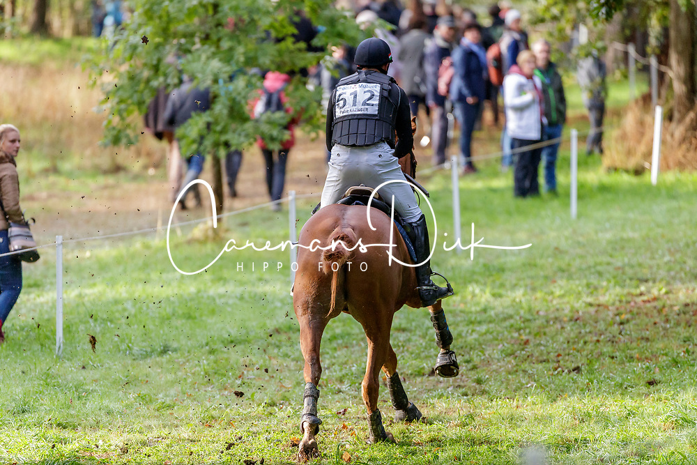 Kaizinger Balazs, HUN, Clover 15<br /> Mondial du Lion - Le Lion d'Angers 2019<br /> © Hippo Foto - Stefan Lafrentz