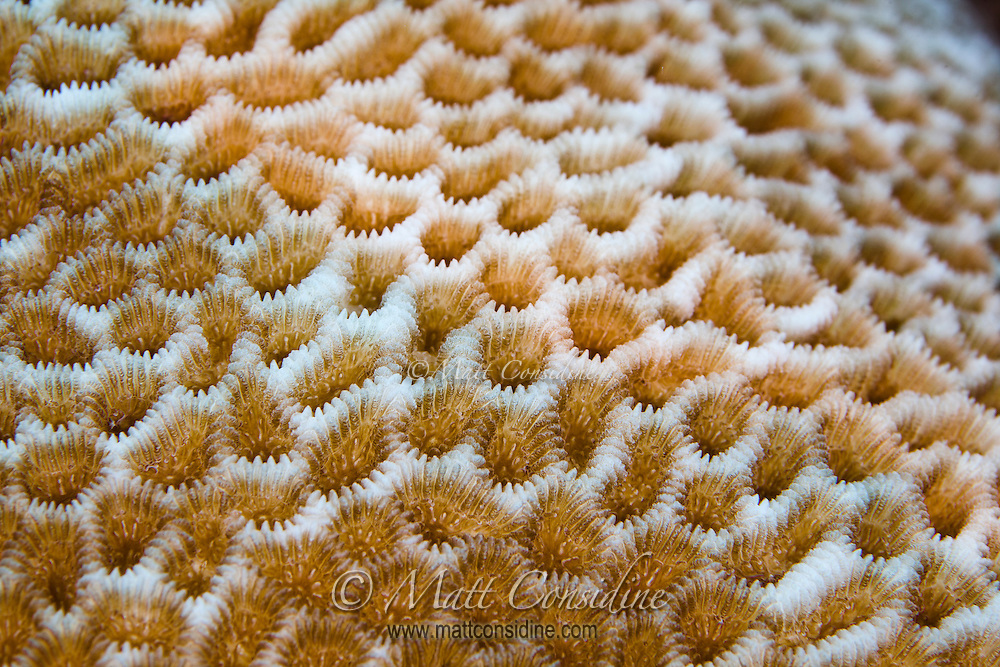 Detailed close up (macro) of the three dimensional surface of hard coral, Palau Micronesia. (Photo by Matt Considine - Images of Asia Collection)
