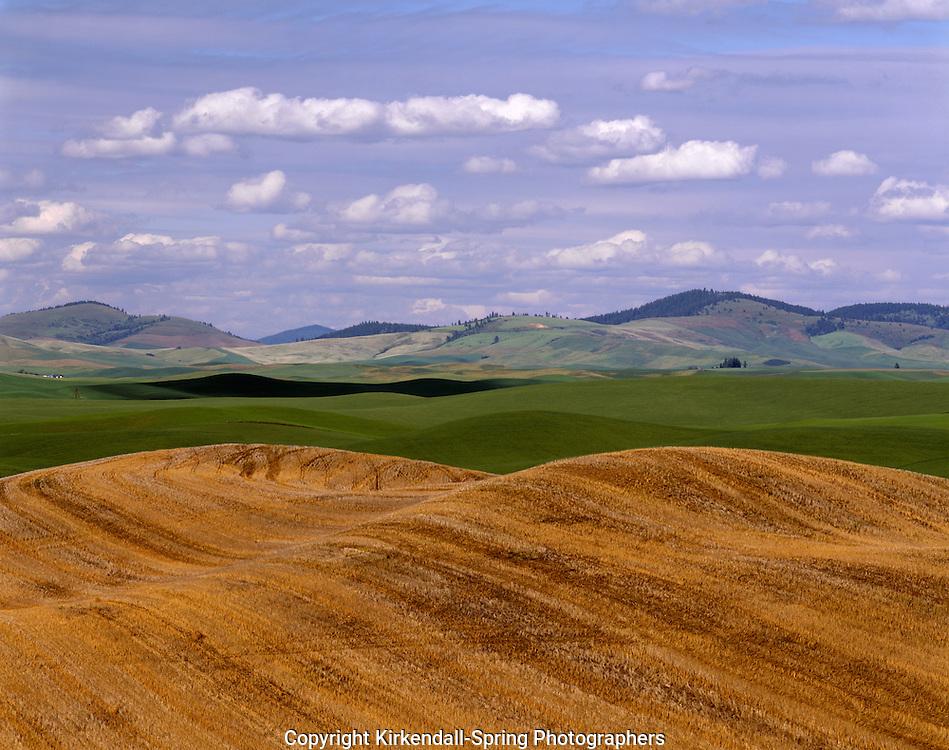 AA07296-01...WASHINGTON - Wheat fields in the fertile Palouse Region of Eastern Washington.