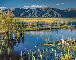 Horizontal image of spring wetlands in Moffat, Colorado..looking at Sangre de Cristo range of the Rocky  Mountains, with old fence running through scene