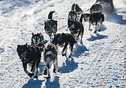 Jean-Marc Champeval's team starts the biennial Silver Sled dog sledding race in Haines Junction, Yukon on March 4, 2017.