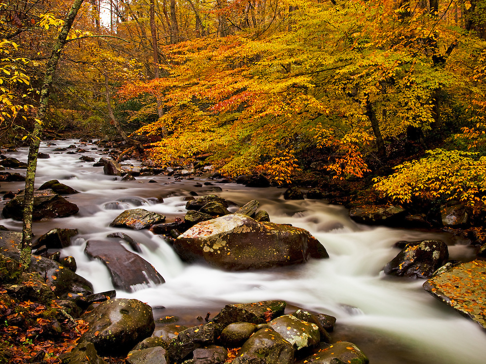 Stream in Fall - GSMNP