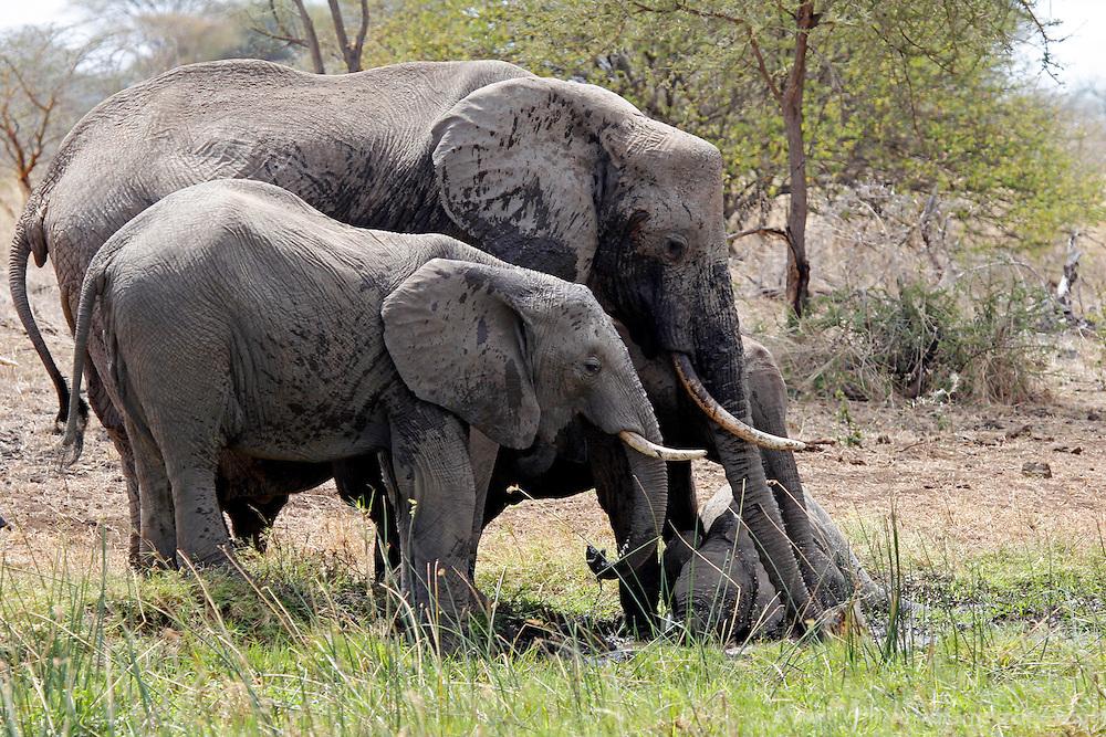 Africa, Kenya, Meru. Elephants and baby at watering hole.