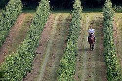 De Vos Pieter - Tekila D<br /> Stal Bekkevoort 2007<br /> Photo © Hippo Foto