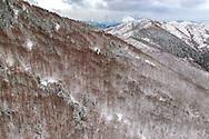 France, Languedoc Roussillon, Cevennes, Gard, hiver, montagne du Liron, col de l'Asclier, massif de l'Aigoual, hêtraie