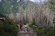 A lady hiker climbs a footpath among diseased and dying spruce trees near Sarnia Skala, a mountain in the Tatra National Park, on 16th September 2019, near Koscielisko, Zakopane, Malopolska, Poland. The European spruce beetle (Ips typographus) is one of 116 bark beetles species in Poland which is killing thousands of spruces. The insect's population can grow rapidly via wind and snow etc. which eventually leaves a gap in the landscape, thereby changing the forest floor's ecology.