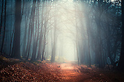 Morning light in a forest near Solingen, Germany.