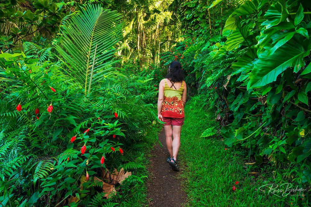 Woman hiking the Onomea Bay trail, Hamakua Coast, The Big Island, Hawaii USA