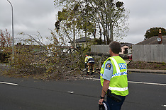Auckland-Tree topples on Ellerslie Highway