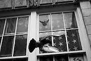An American flag hangs in the window of a Manhattan apartment as pigeons fly about outside.