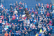"""NASHVILLE, TN - OCTOBER 25:  Bald eagle """"Challenger"""" of the Tennessee Titans flies over the field before a game against the Atlanta Falcons at Nissan Stadium on October 25, 2015 in Nashville, Tennessee.  The Falcons defeated the Titans 10-7.  (Photo by Wesley Hitt/Getty Images) *** Local Caption ***"""
