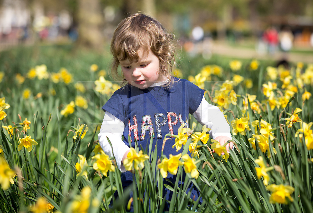 © Licensed to London News Pictures. 20/04/2016. London, UK. Amelia, age three, enjoys the warm weather in St James' park, central London. The MET Office predict highs of 13 degrees celsius. Photo credit : Tom Nicholson/LNP