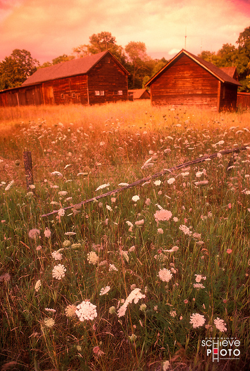 Barns near a field of Queen Anne's Lace in Door County, Wisconsin.