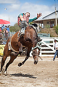 Open Bareback rider Kihikihi Rodeo 2013