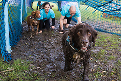 Windsor, UK. 11 May, 2019.  Dogs and their owners compete in the Muddy Dog Challenge obstacle run in Windsor Great Park in aid of Battersea Dogs' and Cats' Home. Credit: Mark Kerrison/Alamy Live News