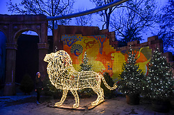 "© Licensed to London News Pictures. 22/11/2018. LONDON, UK. A staff member poses with a giant illuminated lion. Preview of the first ""Christmas at London Zoo"", a festive transformation at ZSL London Zoo which features a one-mile illuminated pathway in a magical after-dark experience.  Historic buildings have been transformed for the event, with glowing fountains lighting the Grade I listed Lubetkin Penguin Pool and festive projections lighting up the historic Mappin Terraces.  The show runs 22 November to 1 January 2019.  Photo credit: Stephen Chung/LNP"