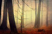 Foggy &amp; moody autumn forest. Textured photo<br />