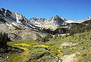 An alpine meadow in the Colorado Rockies.