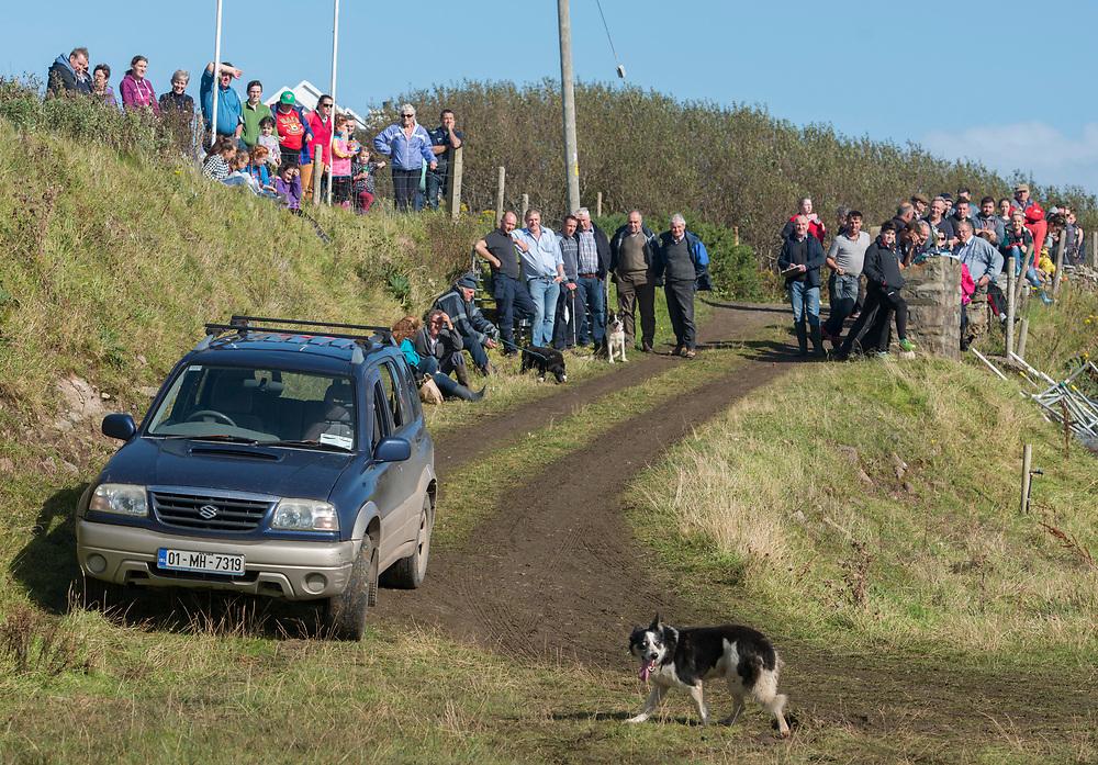 Clare Island Ram Fair & Sheep Dog Trials.