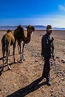 Morocco, Marrakesh. Dromedary and their herder between Marrakesh and Beni Mellal.