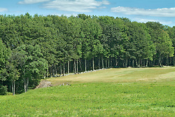 Tree line and pasture
