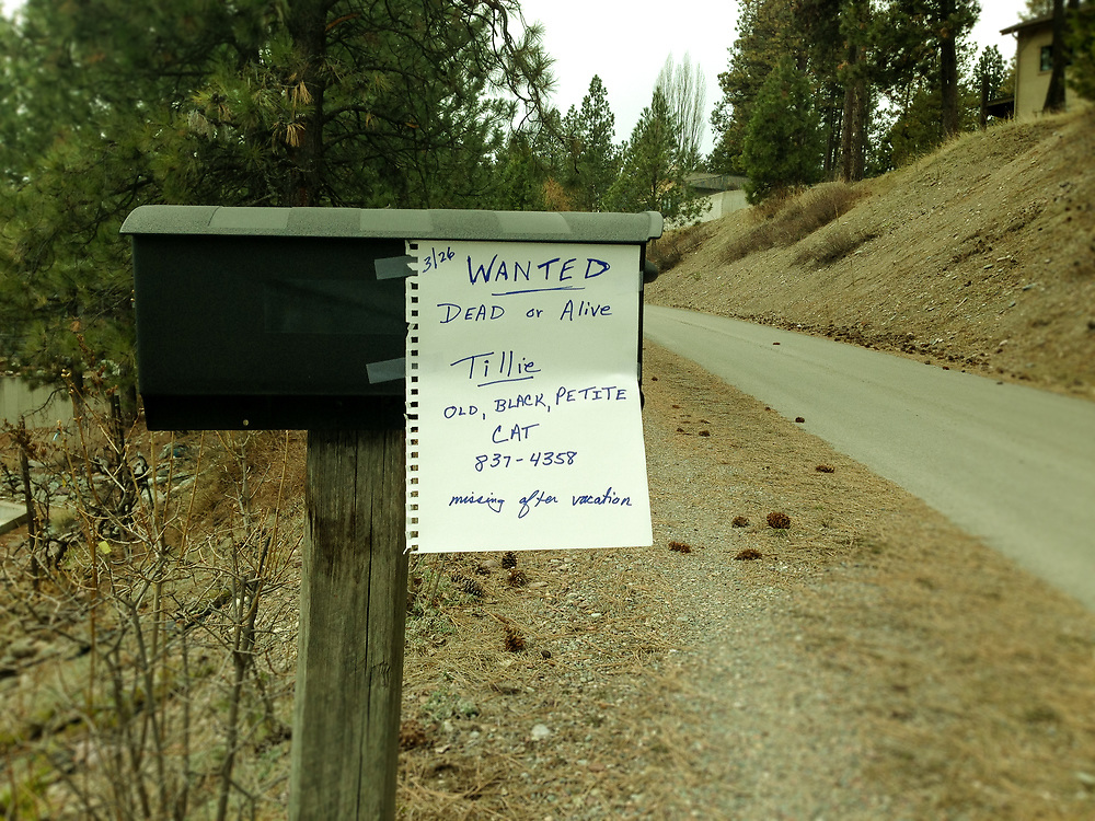 """""""Wanted Dead or Alive"""" missing cat sign on mail box"""