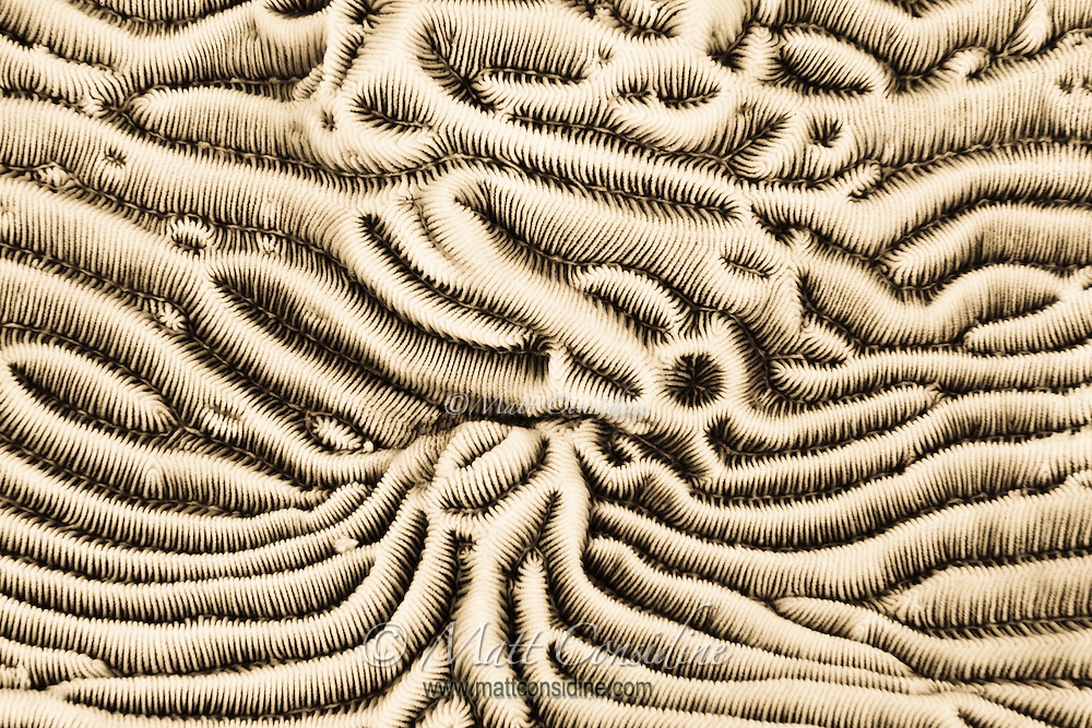 Close up of hard coral terrain, Palau Micronesia. (Photo by Matt Considine - Images of Asia Collection)