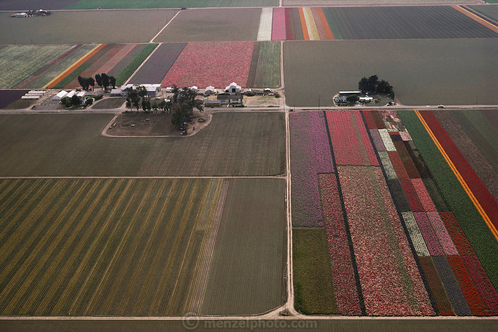 An aerial view of fields of flowers in Lompoc, California.