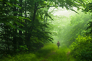 Misty beech forest in West Balkan Mountains