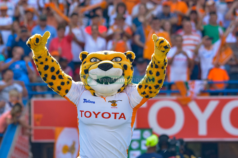 Free State Cheetah mascot during the Currie Cup Final between the The Free State Cheetahs and Blue Bulls held at Toyota Stadium (Free State Stadium), Bloemfontein, South Africa on the 22nd October 2016<br /> <br /> Photo by:   Frikkie Kapp / Real Time Images