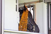 Kristina Sprehe - Desperados FRH<br /> Alltech FEI World Equestrian Games™ 2014 - Normandy, France.<br /> © Hippo Foto Team - Leanjo de Koster<br /> 25/06/14