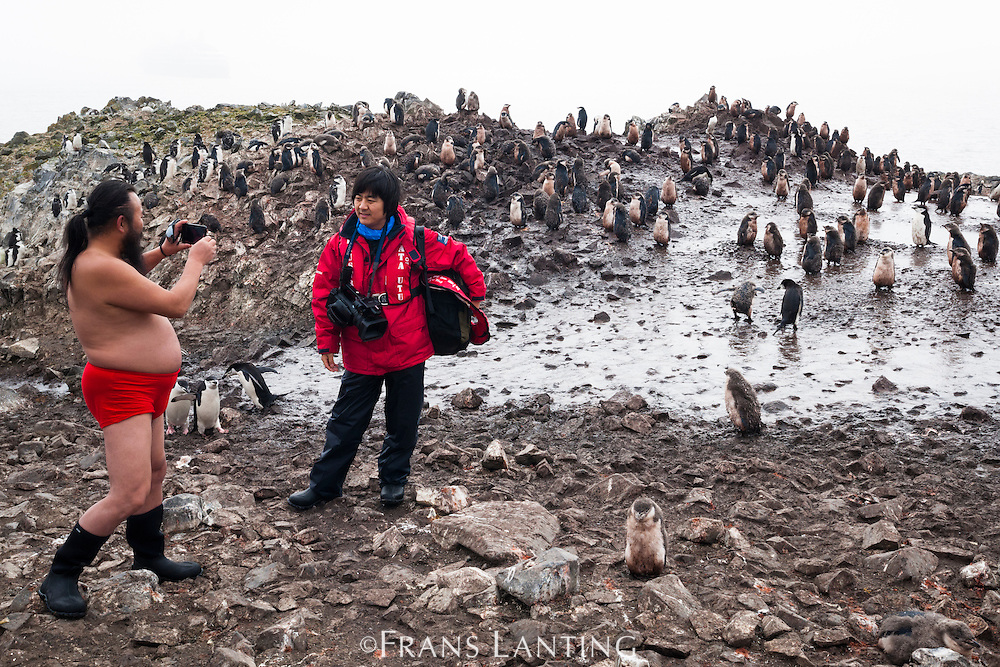 Shirtless Chinese tourist photographing companion in penguin colony, Antarctica