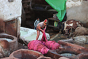 Detail of a teenager working and learning, Chouara tannery, Fez, Morocco, pictured on February 23, 2009 in the evening. Behind him a young boy is running between the pits. The Chouara tannery is the largest of the four ancient tanneries in the Medina of Fez where the traditional work of the tanners has remained unchanged since the 14th century. It is composed of numerous dried-earth pits where raw skins are treated, pounded, scraped and dyed. Tanners work in vats filled with various coloured liquid dyes derived from plant sources. Colours change every two weeks, poppy flower for red, mint for green, indigo for blue, chedar tree for brown and saffron for yellow. Fez, Morocco's second largest city, and one of the four imperial cities, was founded in 789 by Idris I on the banks of the River Fez. The oldest university in the world is here and the city is still the Moroccan cultural and spiritual centre. Fez has three sectors: the oldest part, the walled city of Fes-el-Bali, houses Morocco's largest medina and is a UNESCO World Heritage Site;  Fes-el-Jedid was founded in 1244 as a new capital by the Merenid dynasty, and contains the Mellah, or Jewish quarter; Ville Nouvelle was built by the French who took over most of Morocco in 1912 and transferred the capital to Rabat. Picture by Manuel Cohen.