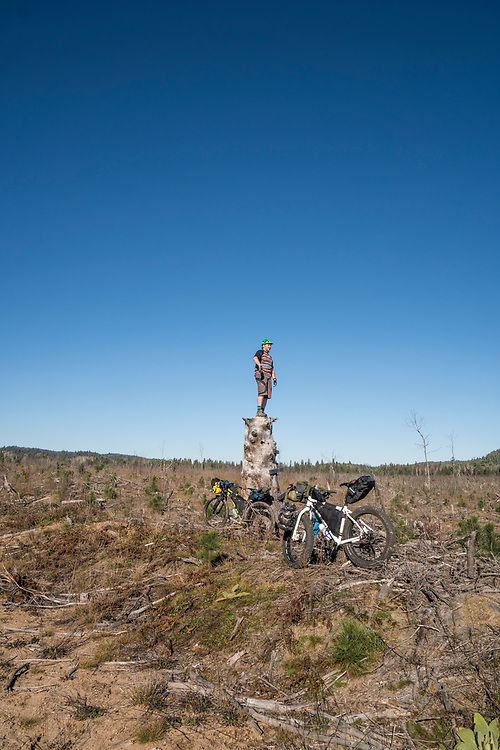 Crossing through a clear cut pine forest while bikepacking in Marquette County, Michigan.