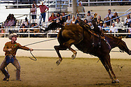 Chris Cox, professional horse trainer, demonstrates his technique for a crowd in Los Angeles on September 15, 2008.