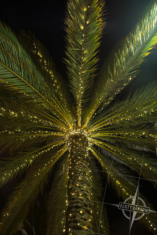 Palm tree with lights in the Clematis District of West Palm Beach, FL