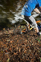 Mountain biker in woodland low section