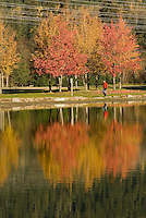 Man walks beside Alta lake, trees in full autumn color in Whistler, BC Canada
