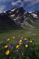 Landscape; Geranium sylvaticum; Ranunculus breyninus; Buttercup; vorder Grauspitz, area around Grauspitz, Lichtenstein