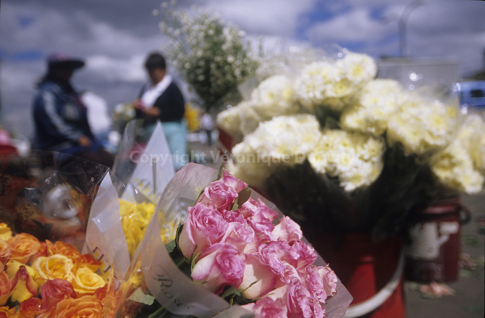BUNCHES OF ROSES, PALOQUEMAO FLOWERS MARKET, BOGOTA, COLOMBIA